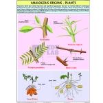 Analogous Organs Plants Chart