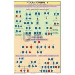 Pedigree Analysis-1 Chart